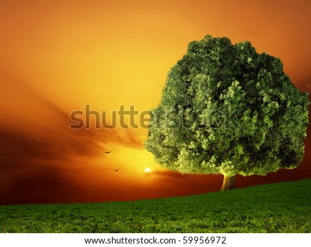 Big tree in a field against colored sunset - stock photo