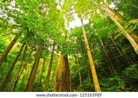 Big tree in the forest Thailand - stock photo
