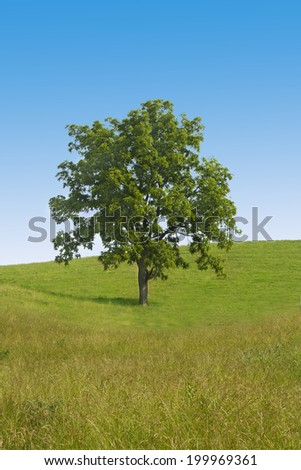 Big tree in the middle of green field against blue sky
