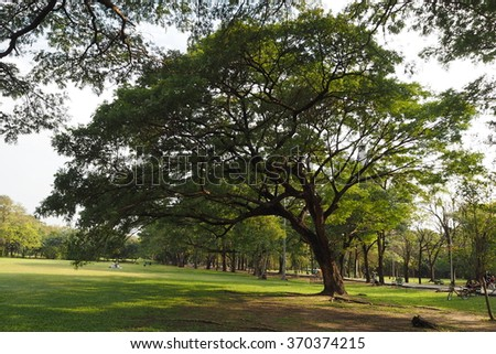 Big tree in the park - stock photo