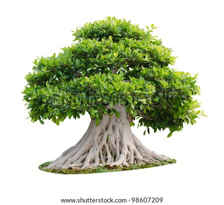 Big tree isolated on white background - stock photo