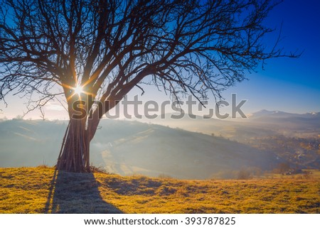 Big tree on a green hill in a Carpathian mountains. Majestic sunrise. Spring time - stock photo