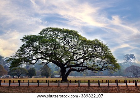 big tree on asian landscape blue stock photo royalty free