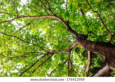 big tree on color background  - stock photo