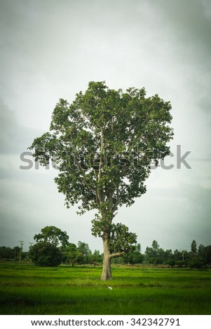 big tree on field
