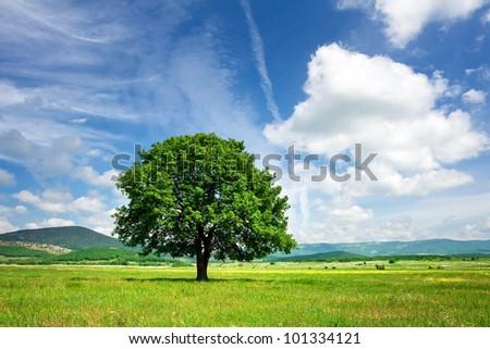 Big tree on green meadow. Summer landscape - stock photo