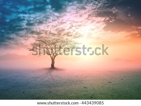 Big tree on meadow. Vintage Art Rural Grass Scenic Time Orange Yellow Eco Sun Plant Dawn Travel View Cloud Village Peace Calm Card Banner Bright Sunlight Blue Heaven Paradise Earthly Life Valley.
