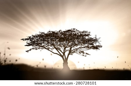 Big tree on meadow. Vintage Art Rural Grass Scenic Time Yellow Eco Sun Plant Dawn Travel View Cloud Village Peace Calm Card Banner Bright Sunlight Black Heaven Paradise Earthly Life Sepia Valley