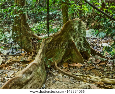 big tree roots tropical jungles of South East Asia - stock photo