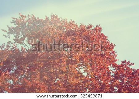 Big tree with autumn red leaves
