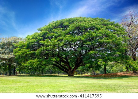 big tree with blue sky - stock photo