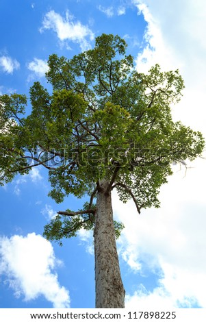 Big tree with blue sky as background. - stock photo