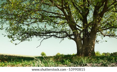 Big tree with branches and land with herbs - stock photo