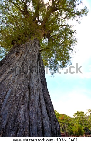 big tree with fresh green leaves - stock photo