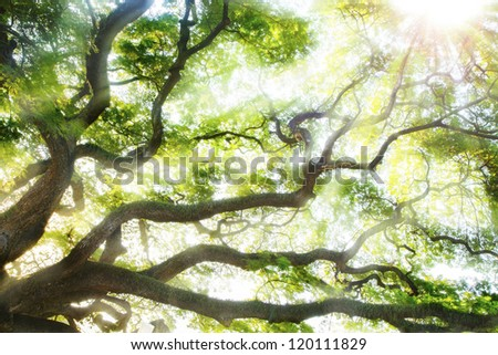 Big tree with sun light. - stock photo