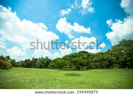 big trees, green grass lawn and blue sky in a park, Thailand - stock photo