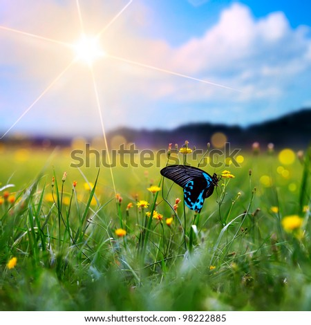 big tropical butterfly sitting on green grass field with flowers - stock photo