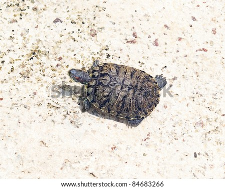 big turtle - stock photo