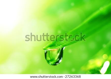 big water drop on grass - stock photo