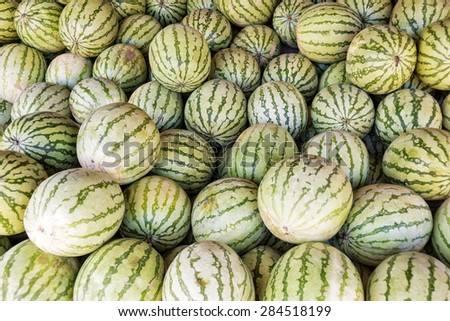 Big watermelons for sale on a fruit market stand - stock photo