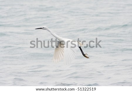 big white egret
