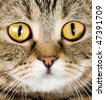 Big yellow eyes. Close-up portrait of cat on a white background - stock photo