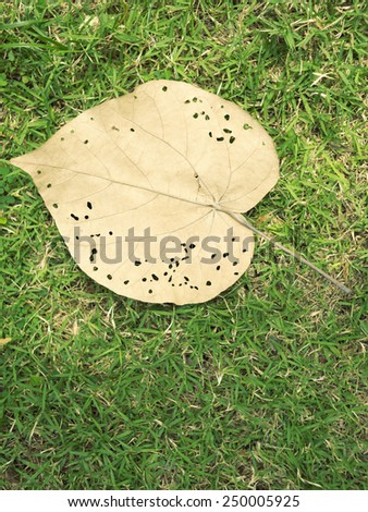 big yellow leaf with bugs burrows over green grass