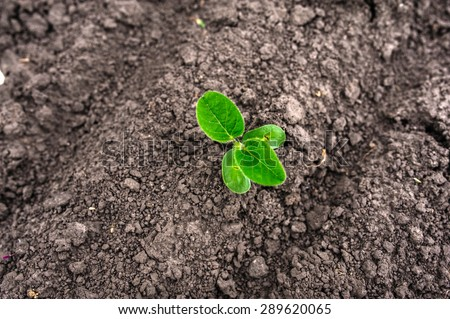 Big young and fresh soybean leaves - stock photo