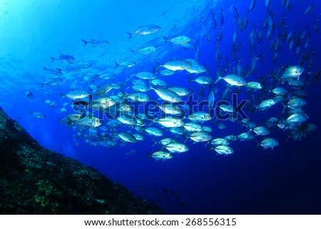 Bigeye Trevallies fish school - stock photo