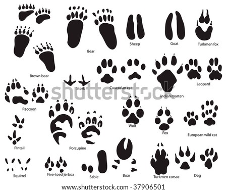 Biggest collection of animal and bird trails with title - stock photo