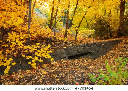 Bigtooth Maple grove with old stone wall in Millcreek Canyon, Salt Lake City area, Utah. October autumn leaves. - stock photo