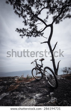 Bike under the tree on the hill - stock photo