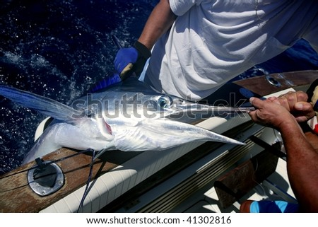 Billfish white Marlin catch and release on boat board - stock photo
