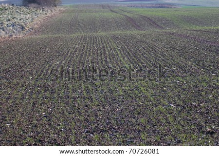 Billowy field with the young crops. - stock photo