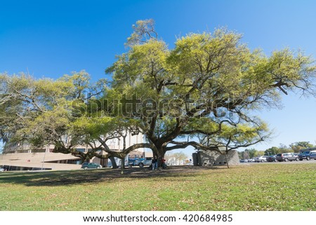BILOXI, MISSISSIPPI - MARCH 22, 2016: A mother and her two daughters under a 300 plus year old live oak tree. Taking a break from the activities at the National Jr. Beta Convention. - stock photo