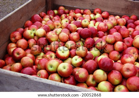 Bin of Apples