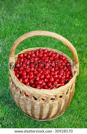 Bing cherries in wooden basket on the grass. - stock photo