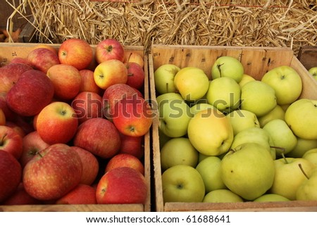 bins of apples, both red and green selling at the market - stock photo