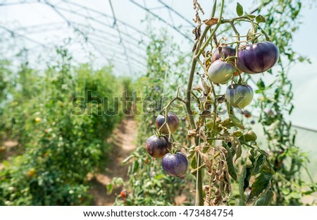 Bio Garden Eco Vegetables Tomatoes Peppers Stock Photo Royalty Free