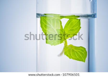 bio research test tube with green sprout in liquid solution - stock photo