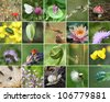 Biodiversity collage with all non-agricultural value plants or animal, but important for eco-balance (all images belong to me) - stock photo
