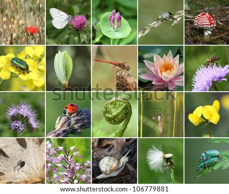 amazon rainforest plants collage. biodiversity collage with all nonagricultural value plants or animal but important for eco amazon rainforest l