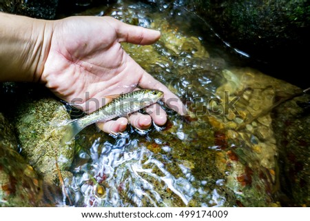 Biodiversity concept - Hand holding freshwater fish at natural rainforest waterfall