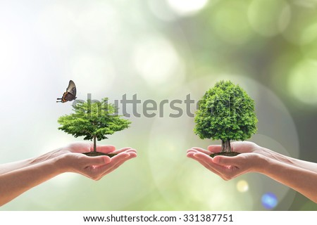 Biodiversity ecosystem People human hand planting/ saving growing different species of tree/ eco bio life on soil living butterfly Clean environment on blur nature background greenery: CSR ESG concept - stock photo