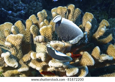 Biodiversity of Rangiroa atoll - stock photo