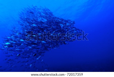 Biodiversity of Rangiroa atoll, Polynesia. - stock photo