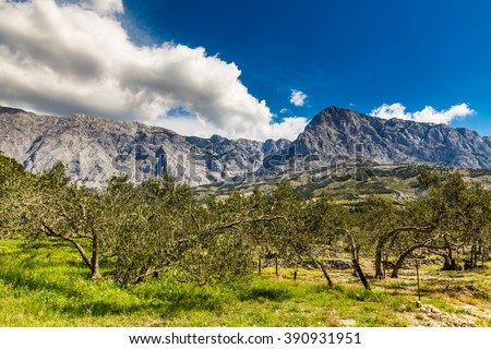 Biokovo Mountain Nature Park And Trees From Makarska Riviera-Biokovo, Dalmatia, Croatia, Europe - stock photo