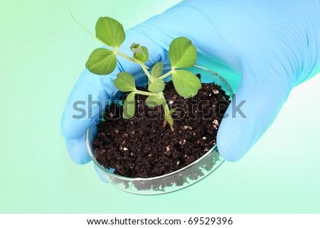 Biologist's hand holding pea plant with petri dish - stock photo