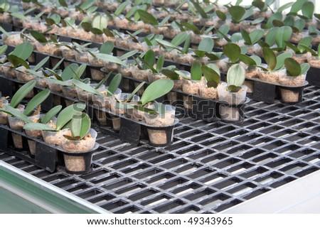 Biotechnology - stock photo