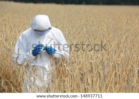 biotechnology engineer on field examining ripe ears of grain - stock photo